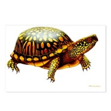 Colorful Eastern Box Turt Postcards (Package of 8)