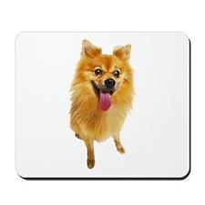 Pomeranian Photo Mousepad