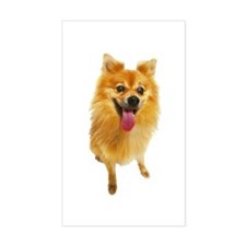 Pomeranian Photo Rectangle Decal