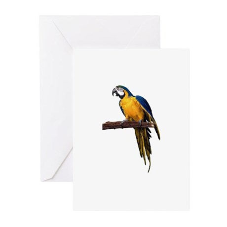 Macaw Photo Greeting Cards (Pk of 10)