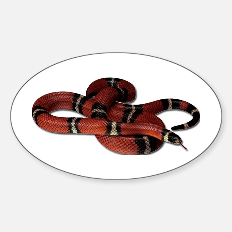 Milk Snake Oval Decal