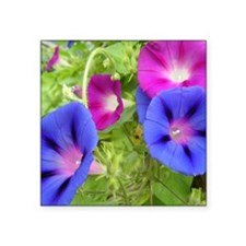 "Morning Glories Square Sticker 3"" x 3"""