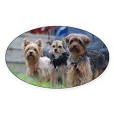 Morkie, Chorkie and Yorkie Decal