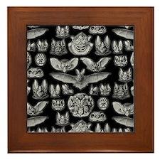 Vintage Bat Illustrations Framed Tile