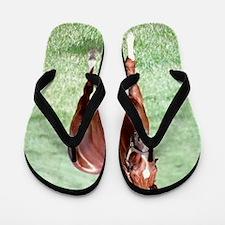 CHARISMATIC Flip Flops