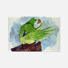 Quaker Parakeet Rectangle Magnet