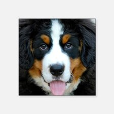 "Bernese Mountain Dog Puppy  Square Sticker 3"" x 3"""