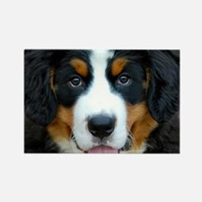 Bernese Mountain Dog Puppy 2 Rectangle Magnet
