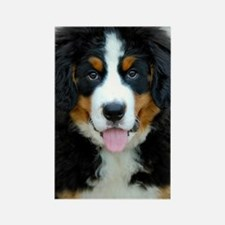 Bernese Mountain Dog Puppy 3 Rectangle Magnet