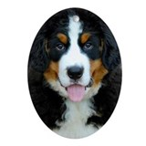 Bernese mountain dog Oval Ornaments