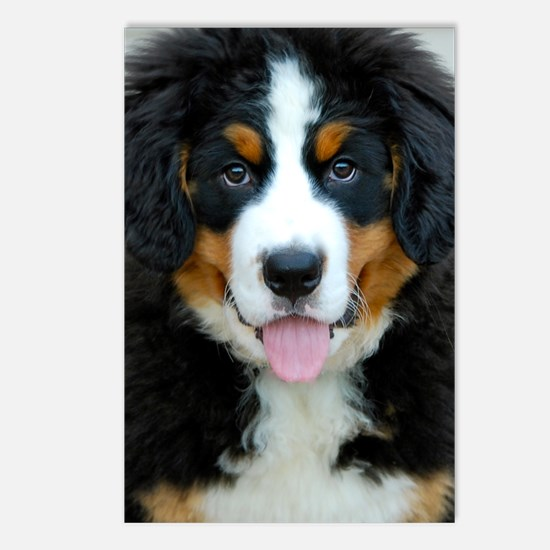 Bernese Mountain Dog Pupp Postcards (Package of 8)