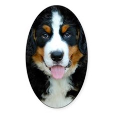 Bernese Mountain Dog Puppy 3 Decal