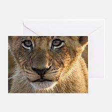 Sparta Lion Cub Greeting Card