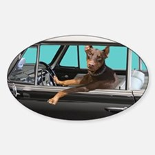 Doberman Pinscher in Classic Car Sticker (Oval)