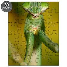 mantis Puzzle
