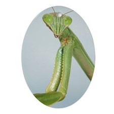 mantis Oval Ornament
