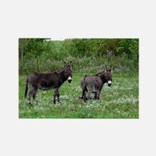 Two Miniature Donkeys Rectangle Magnet