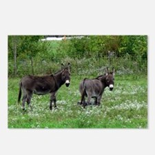 Two Miniature Donkeys Postcards (Package of 8)