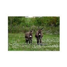 Two Miniature Donkeys (2) Rectangle Magnet