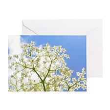Elderflower Sky Greeting Card