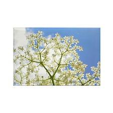 Elderflower Sky Rectangle Magnet