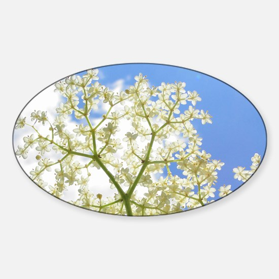 Elderflower Sky Sticker (Oval)