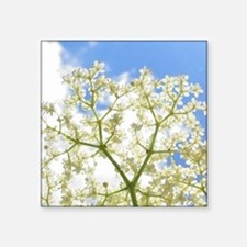 "Elderflower Sky Square Sticker 3"" x 3"""