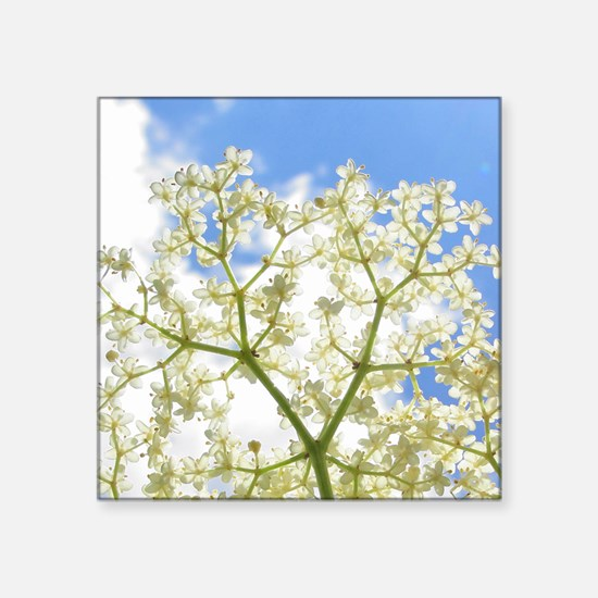 "Elderflower Sky Square Sticker 3"" x 3"""