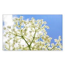 Elderflower Sky Decal