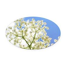 Elderflower Sky Oval Car Magnet