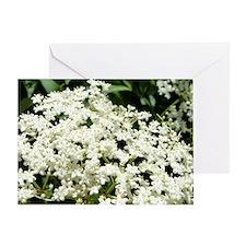 Elderflowers Greeting Card