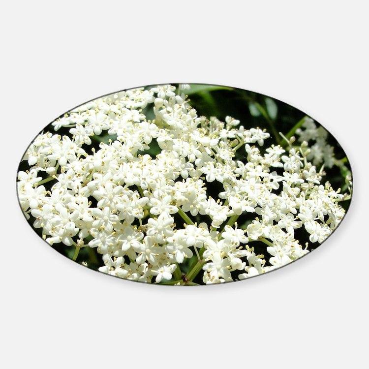 Elderflowers Sticker (Oval)