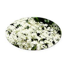 Elderflowers Oval Car Magnet
