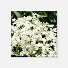 "Elderflowers Square Sticker 3"" x 3"""