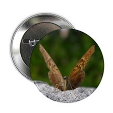 Tawny Emperor Butterfly Button