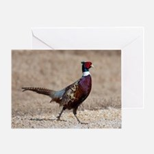 Ringnecked Pheasent Greeting Card