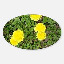 Dandelion Sticker (Oval)