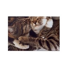 Cute kittens hugs and kisses Magnets