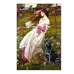 Windflowers & Black Lab Postcards (Package of 8)