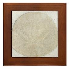 sand dollar design Framed Tile