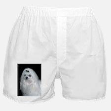 maltese Boxer Shorts