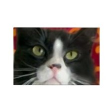 Funny Tuxedo cats Rectangle Magnet