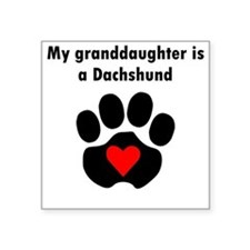 My Granddaughter Is A Dachshund Sticker