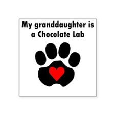 My Granddaughter Is A Chocolate Lab Sticker