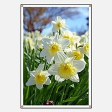 White and yellow daffodils Banner