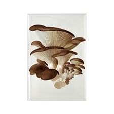 Mushrooms Magnets