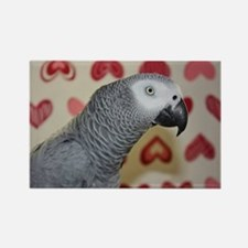 Valentine's Day African Grey Parr Rectangle Magnet