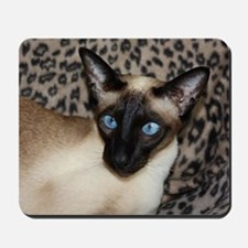 Seal Point Siamese Cat Jazell with a leo Mousepad