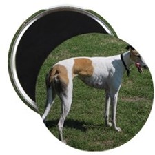 greyhound full Magnets