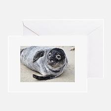 Grey Seal Greeting Cards